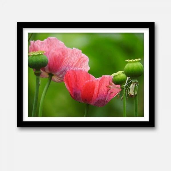 Indoor art artwork pink poppies print canvas