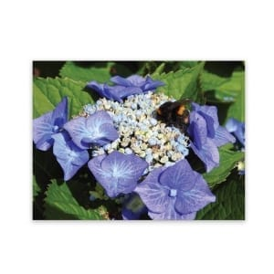 Garden Art New Zealand Indoor And Outdoor Waterproof Garden Wall Art Panel Of Hydrangea Flowers And A bumble Bee