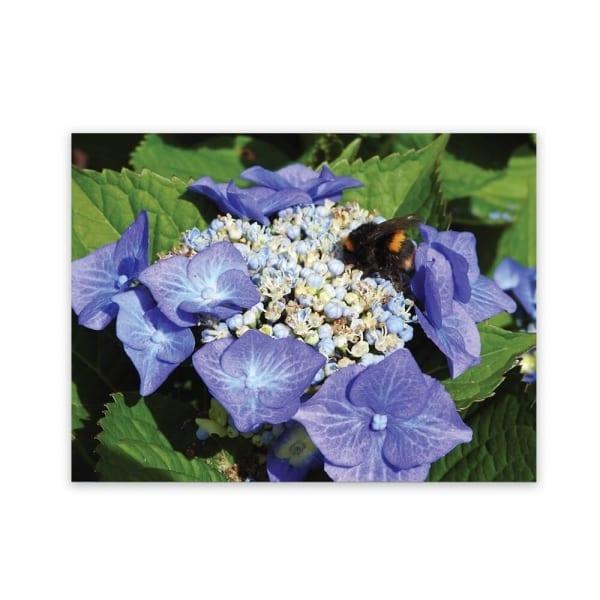 Garden Art New Zealand Indoor And Outdoor Waterproof Garden Wall Art Panel Of Hydrangea Flowers And A bumble Bee