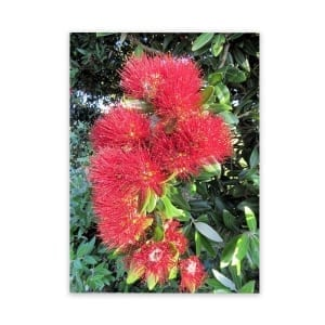 pohutukawa flower garden art panel