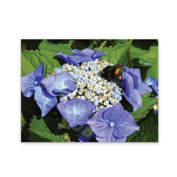 Hydrangea garden and landscaping design art panel