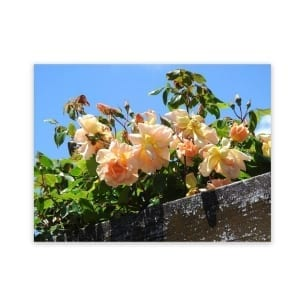 outdoor wall art rambling rose