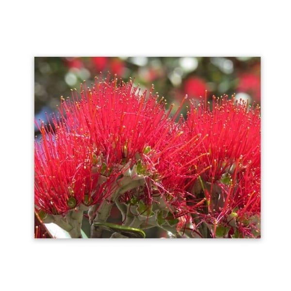 garden wall art with a photograph of pohutukawa flowers